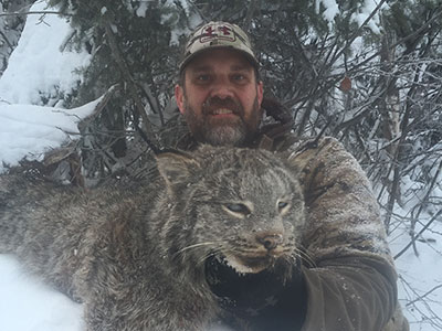 4 lynx in 47 hrs. |Lynx Hunting With Hounds