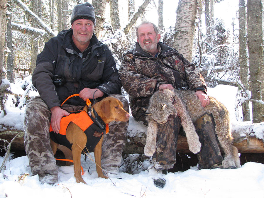 BC Cougar Cat Hunts with Hounds, Lynx Hunt, Winter ... |Lynx Hunting With Hounds