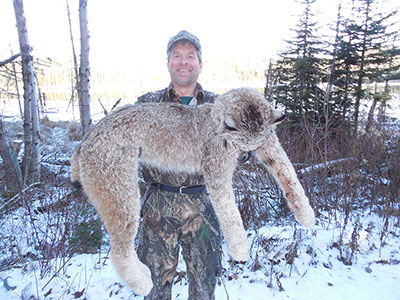 6-DAY WINTER LYNX HUNT WITH HOUNDS FOR 1 HUNTER - WSF ... |Lynx Hunting With Hounds